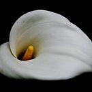 Lily by gahuja