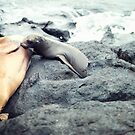 Nursing Sea Lion by Solefield