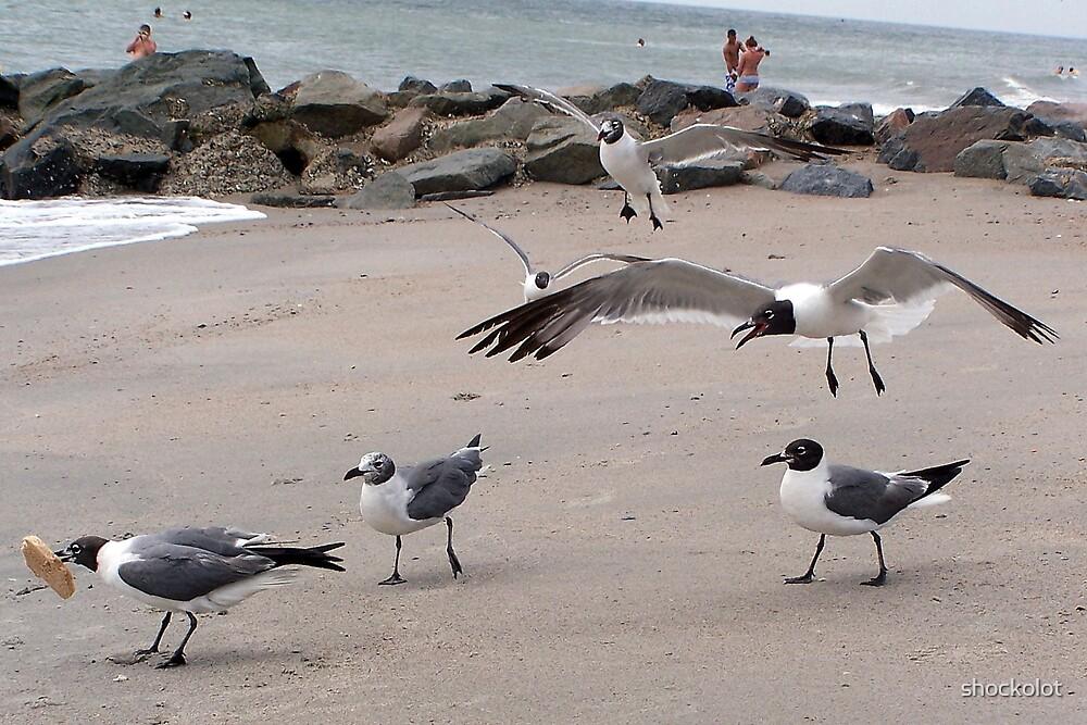 Gulls in Flight by shockolot