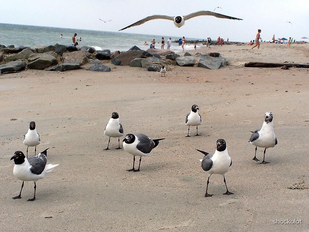 Gulls in Flight III by shockolot