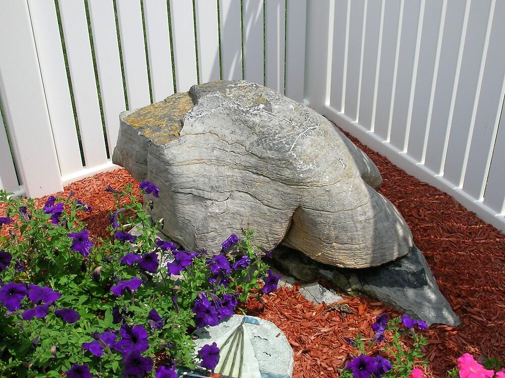 Turtle Rock by Lynnhc