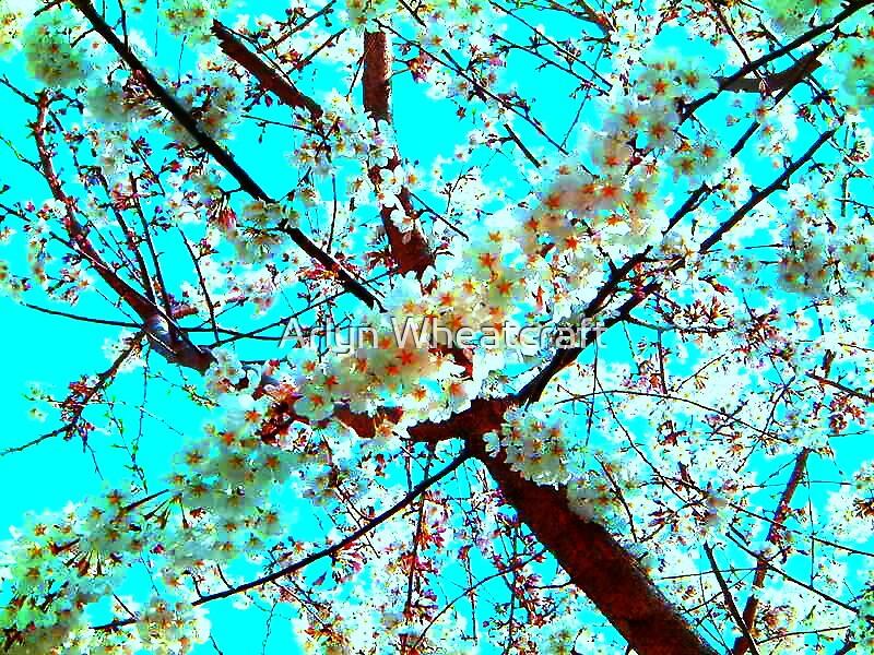 Cherry Blossom by Arlyn Wheatcraft
