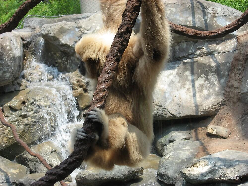 A monkey by Bonie