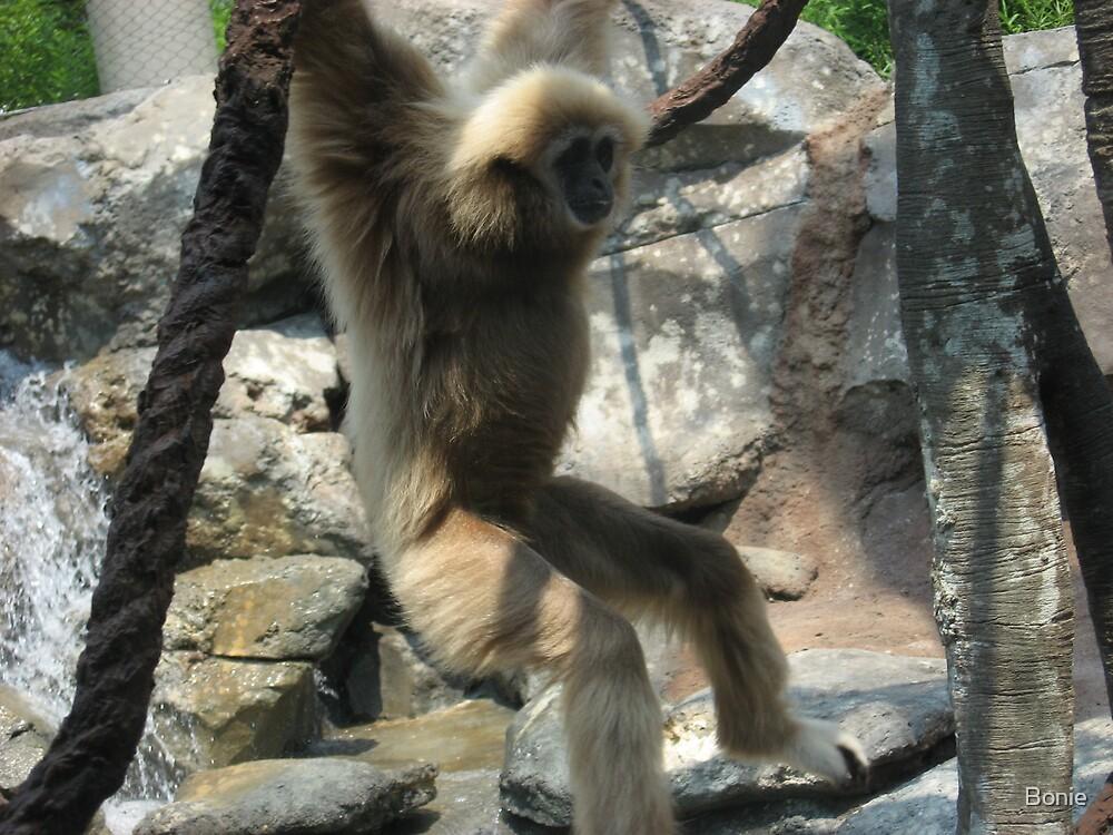 zoo pics by Bonie