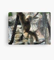 zoo pics Metal Print