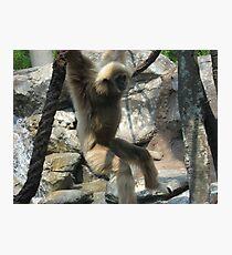 zoo pics Photographic Print