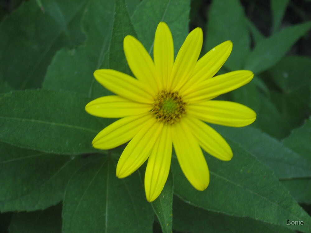 flower by Bonie