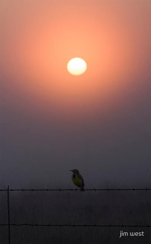 Fog again by jim west