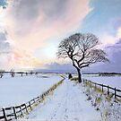 Winter Trail II by Jan Szymczuk