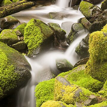 Rain Forest - Sol Duc Falls Trail (9145) by blwdigital