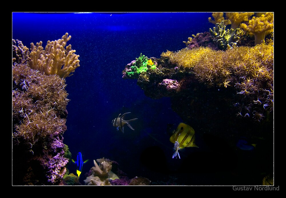 The Aquarium by Gustav Nordlund