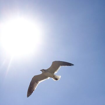Gull in Flight by Cardet