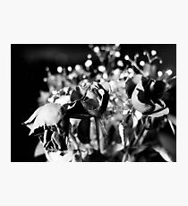 Weeping Photographic Print