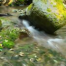 Simmons Creek by Chappy
