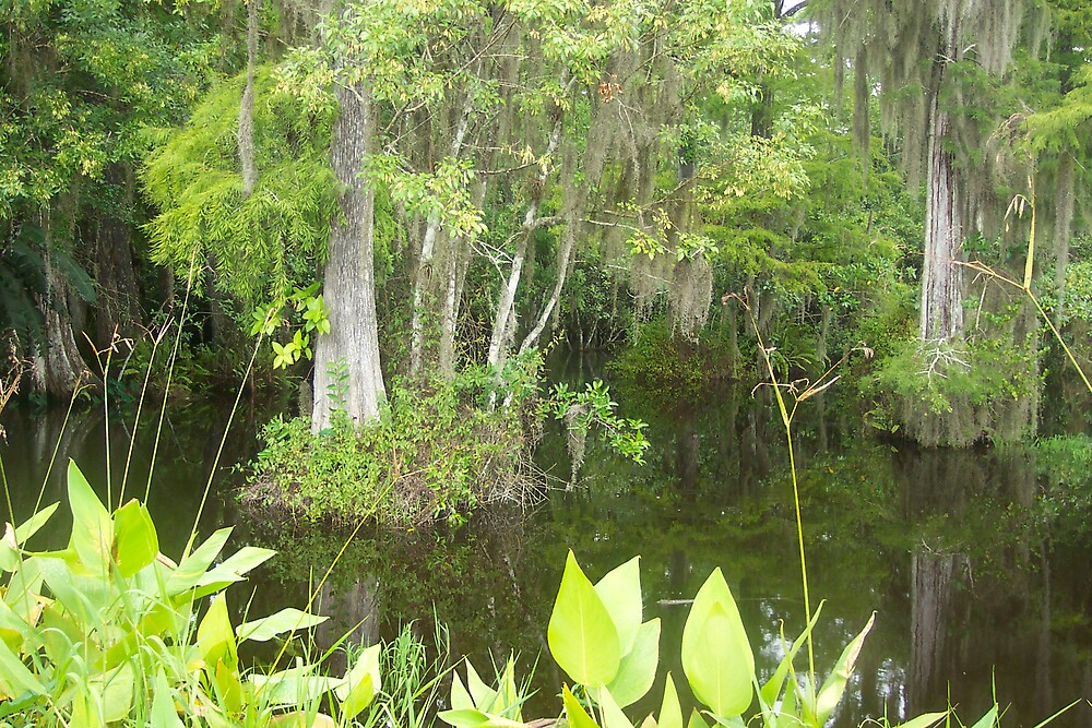Cypress Swamp by Cardet