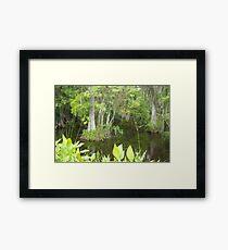 Cypress Swamp Framed Print