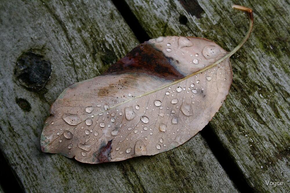 Moring Dew by Voyce