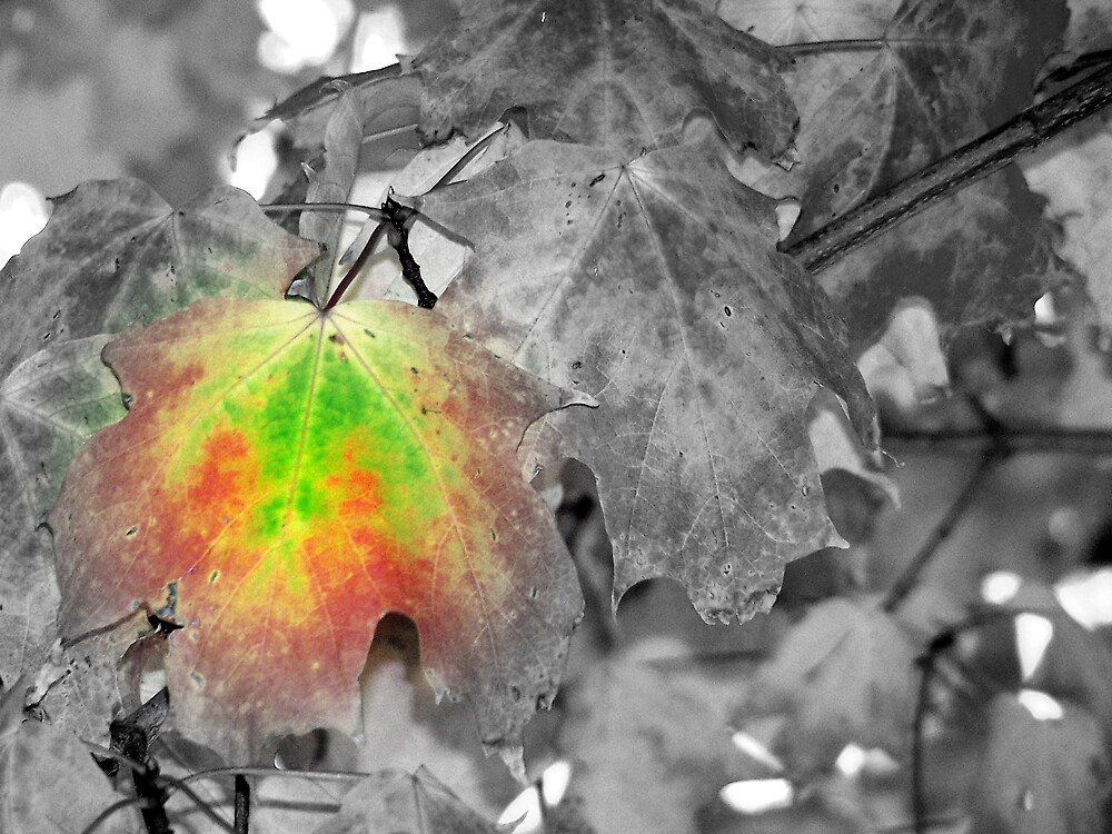 Splash of Autumn by KaylaMarie