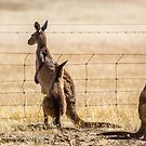At the fence by Rick Playle