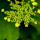 Green Blooms by Tammy Hale