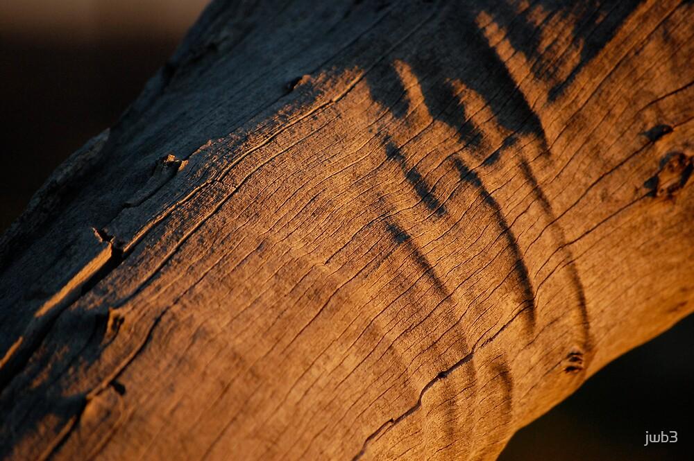 Dead wood sun by jwb3