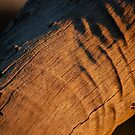 Dead wood sun by jwb3