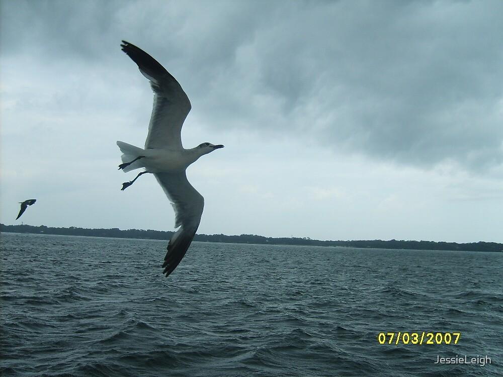 bird flying over the ocean by JessieLeigh