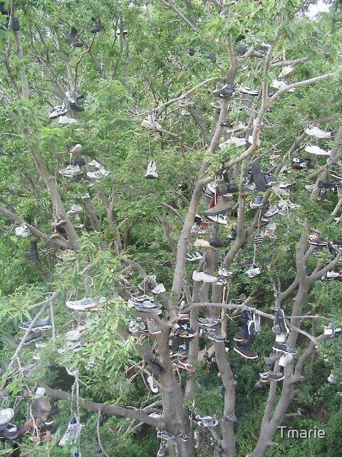 Shoe tree by Tmarie