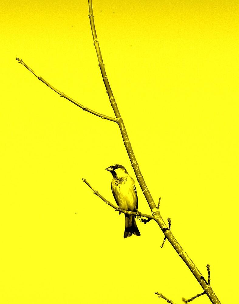 striking bird by charmaine