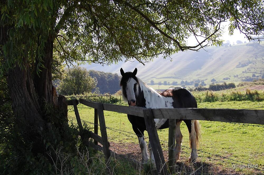 Horse ii by gingerbird