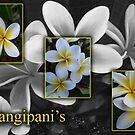 Frangipani's by Nina1962