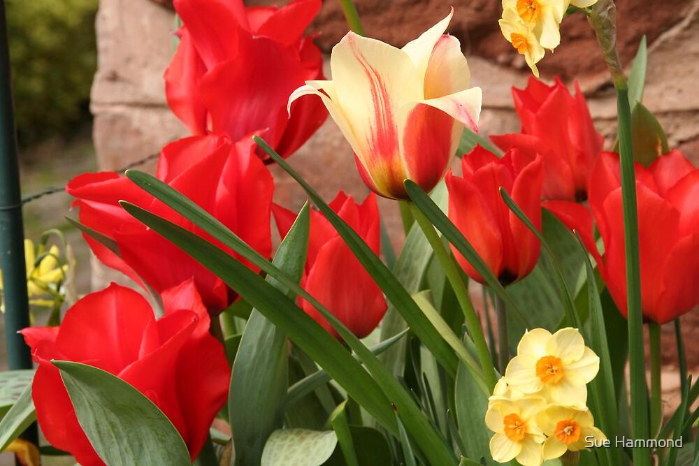 Flowers by Sue Hammond
