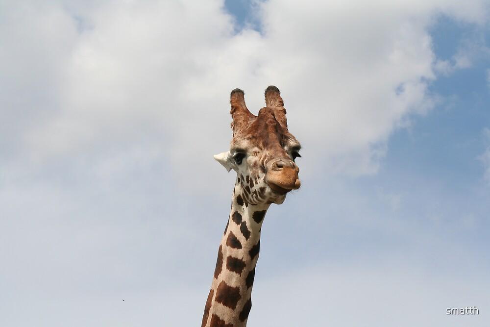 Giraffe by smatth