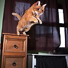 Ginger cat jumping from cupboard by turniptowers