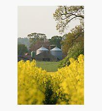 Plantation Photographic Print