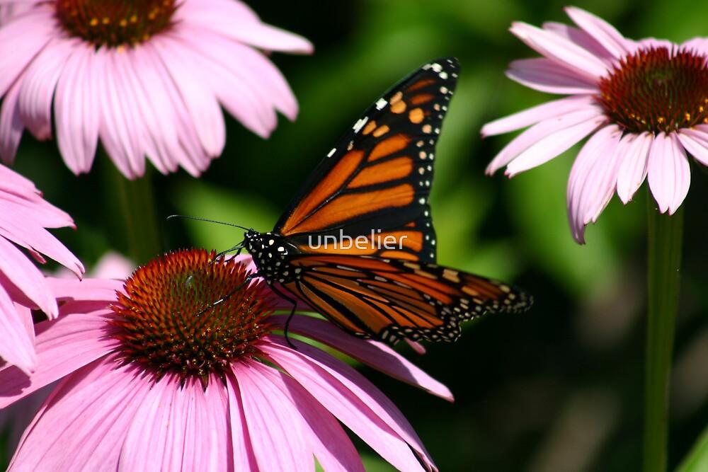 Butterfly by unbelier