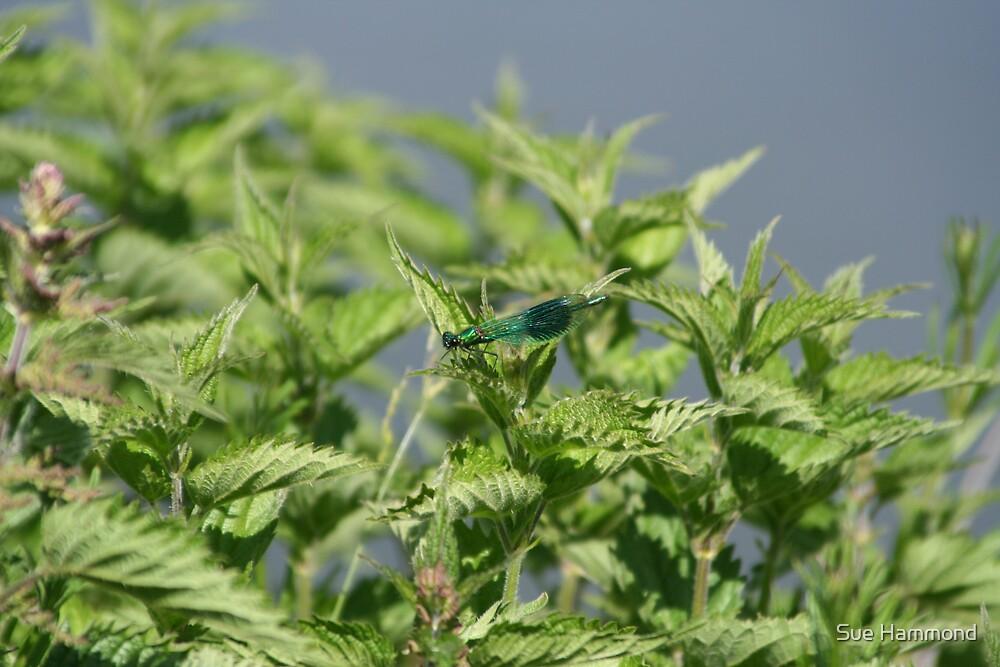 Damsel fly by Sue Hammond