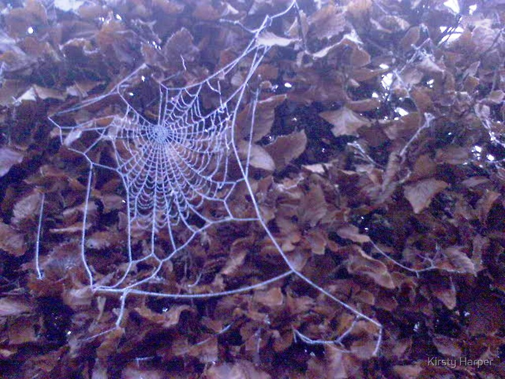 Frozen Spider's web by Kirsty Harper