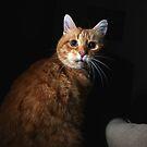 Worried cat by turniptowers