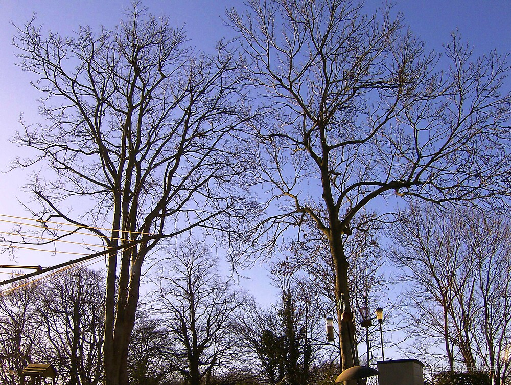 Trees in Winter by Kirsty Harper