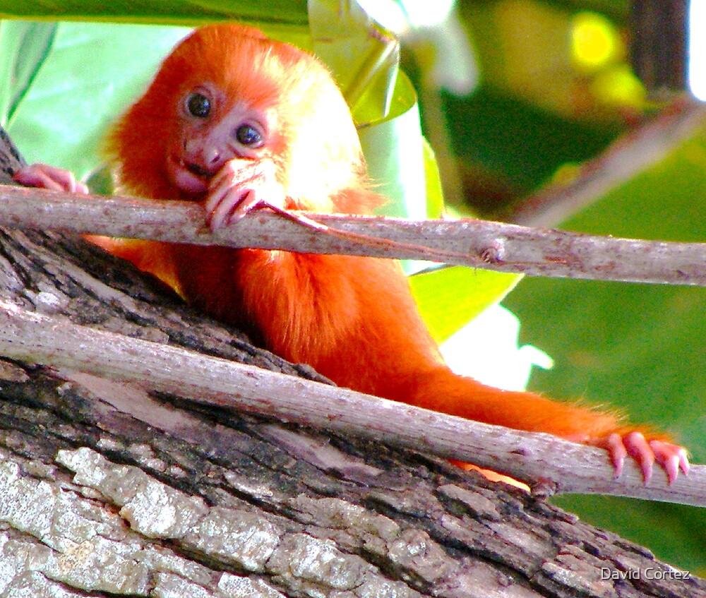 monkey by David Cortez