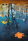 Reflection by Igor Zenin