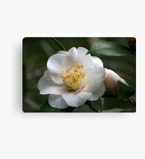 White Camellia II Canvas Print