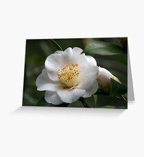 White Camellia II Greeting Card