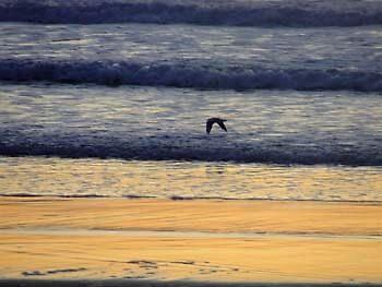 Sunrise Gold Coast 7 by woody45