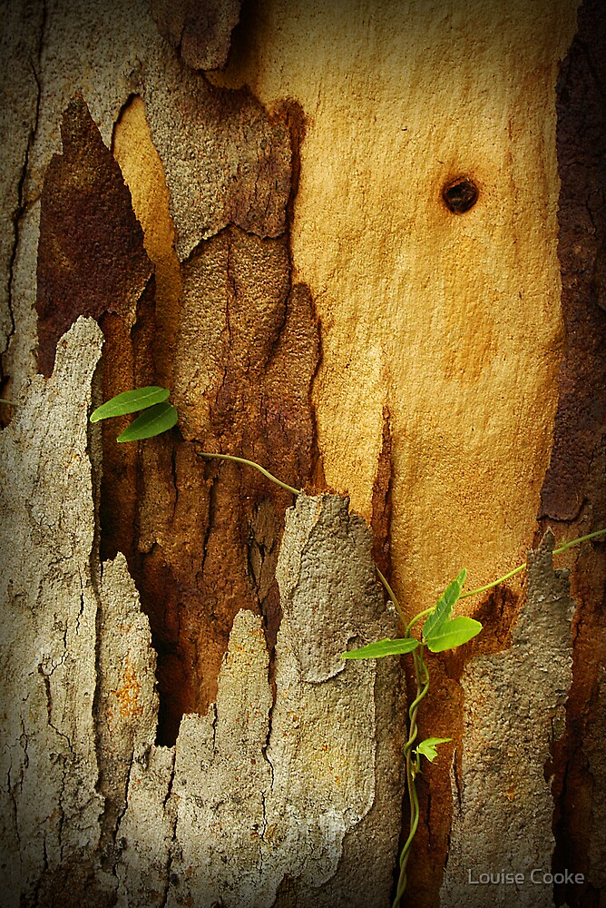 Bark and leaf by Louise Cooke