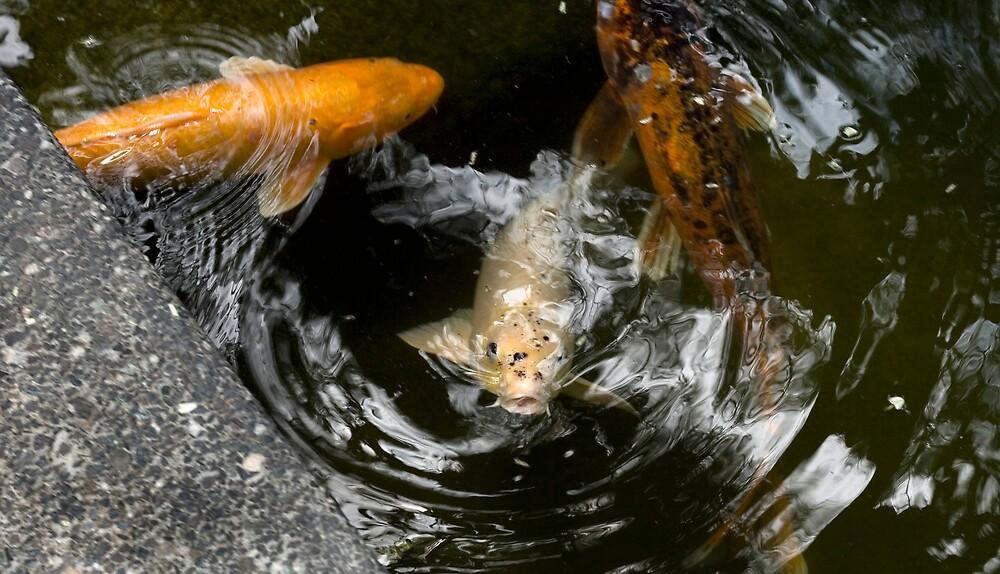Koi Fish by Francis Alfred