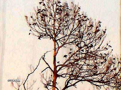 the birds.. by suezhenson