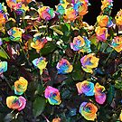 Rainbow roses by Arie Koene