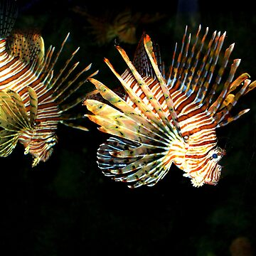 lionfish by redhood